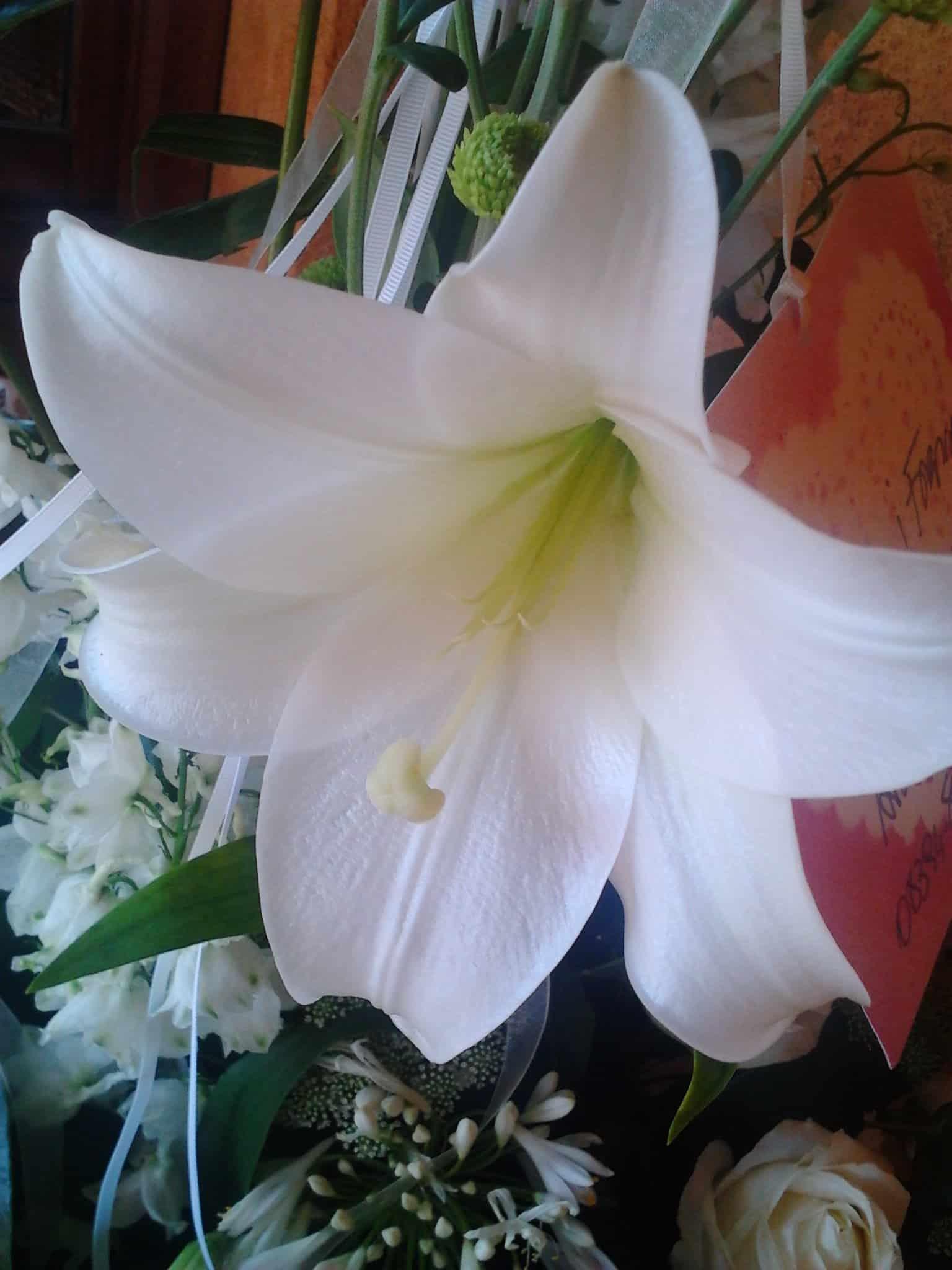 flor blanca de la felicidad