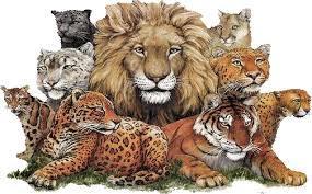 animales, tigres y leones