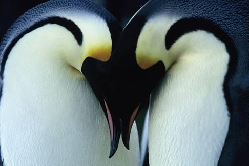 pareja de pájaros unida