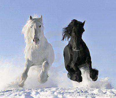 caballo-blanco-y-negro-