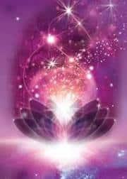 llama violeta- flor de loto