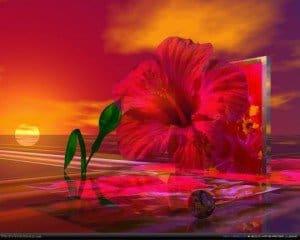 flor de Ibisco