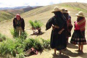 Conocimientos tradicionales y medidas adaptativas frente al cambio climático en ecosistemas de altas montañas