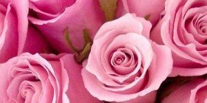 Roses_-cover-photo-10100-580x150