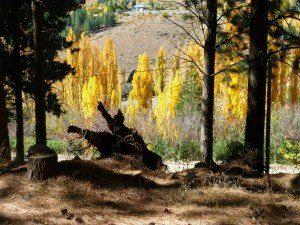 tierra árboles y sol