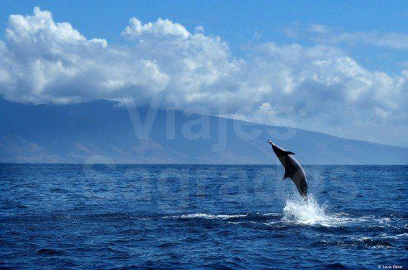 Delfin - viaje a Hawaii