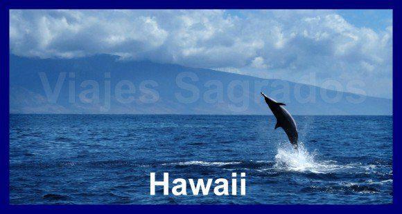 Delfin - viajes sagrados