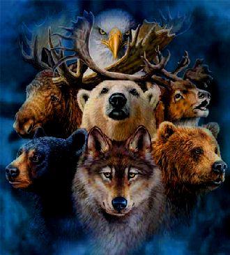Animales de poder -Curso de chamanismo- Empoderate
