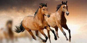 el miedo y la violencia nuestra sanacion con los caballos