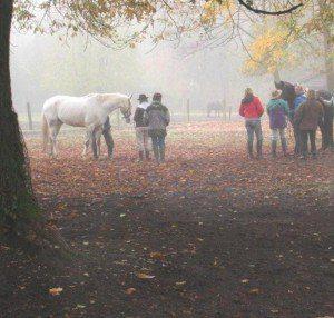 manada de caballosmanada de caballos