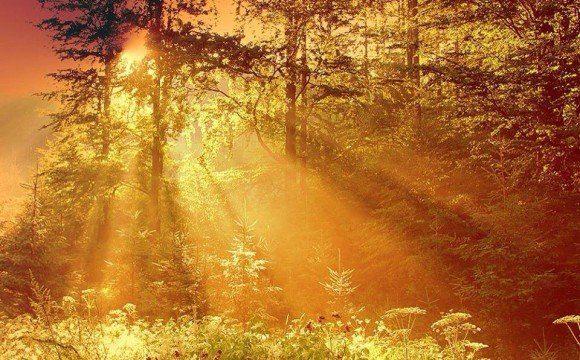 la luz del sol reflejafa en los árboles
