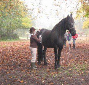 domar caballo
