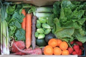 verduras modificadas geneticamente