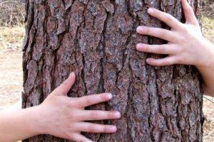 Ecoterapia: Reconectando a nuestros hijos con la naturaleza.