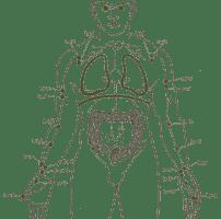 Los pulmones: en la caja torácica, tu Alma
