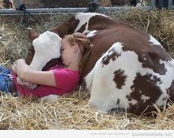 hermandadblanca nina con una vaca al lado Comunicación Telepática con Animales – María V. Simona