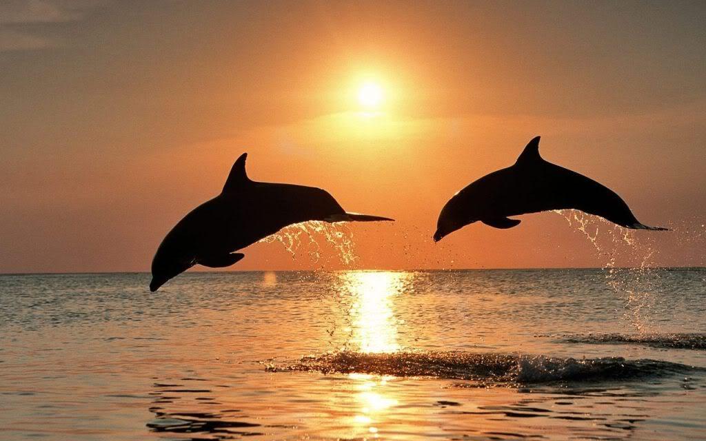 hermandadblanca delfines saltando en el mar Transición a la Quinta Dimensión por José Carlos López Garrido