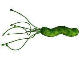 ¿Qué te han dicho de la Helicobacter Pylori?