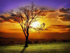 arbol-sol-paisaje-luz