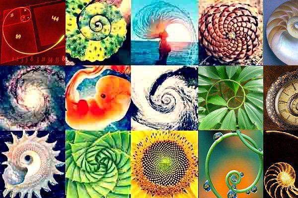 crecimiento-espiral