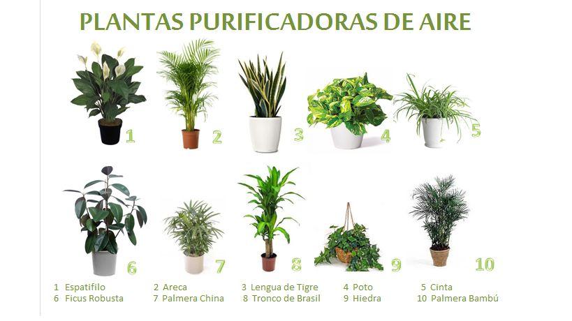 Plantas de interior que purifican el aire de tu casa - Plantas de interior que purifican el aire ...