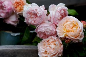 rosas blancas y rosas
