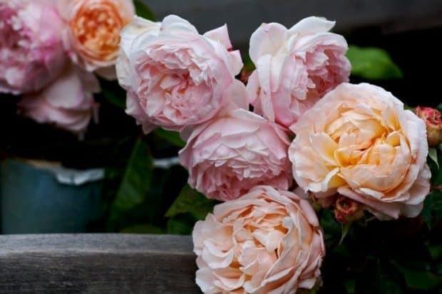 hermandadblanca rosas blancas y rosas 620×413.jpg - Dejando atrás las creencias que te dañan por Jocelyne Ramniceanu - hermandadblanca.org