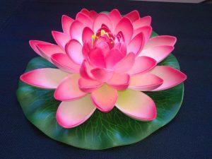 flor de loto 8 pétalo