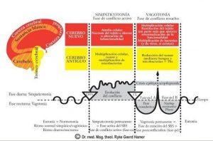 fases sanacion