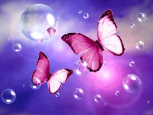mariposas transformación