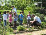 hermandadblanca 20150507 huerto escolar ninos observando aprendiendo 620×465.jpg - El huerto escolar: ¿por que es tan importante poner en contacto a nuestros hijos con la naturaleza? - hermandadblanca.org