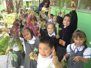 20150507_huerto_escolar_niños_recogiendo_frutos