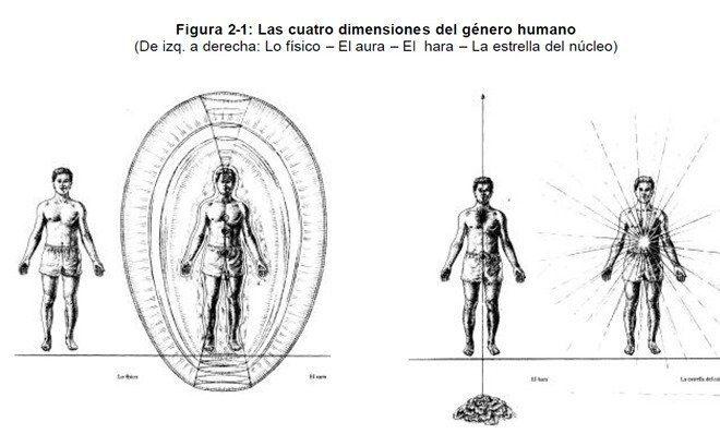 dimensiones genero humano