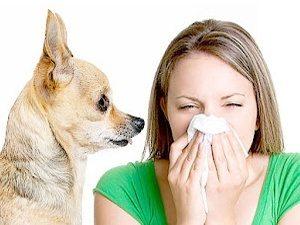 Alergia-al-pelo-de-animales