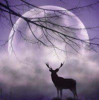 Luna Llena en Sagitario– aprender, meditar y estarse tranquilo