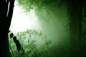Nosotros saboteamos continuamente nuestros sueños y nuestro futuro en un esfuerzo por salvar las selvas salvajes del viejo yo