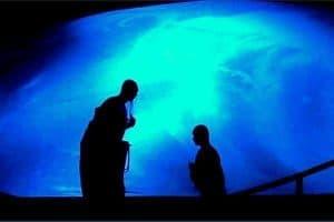 Tarot y MTC: El Tao del Sumo Sacerdote