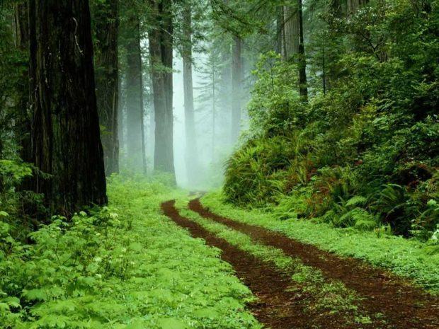 TAROT Y MTC - el enamorado - paisaje verde