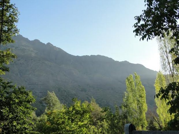 Gratitud - Tornasol - paisaje de chile