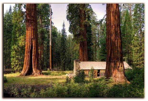 secuoyas - con una casa y naturaleza