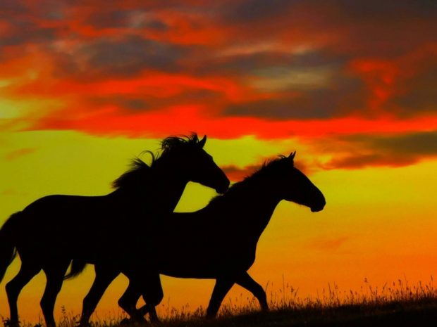 caballos galopando al atardecer