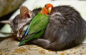 amor y animales