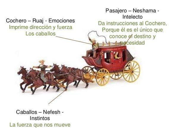 carroalma