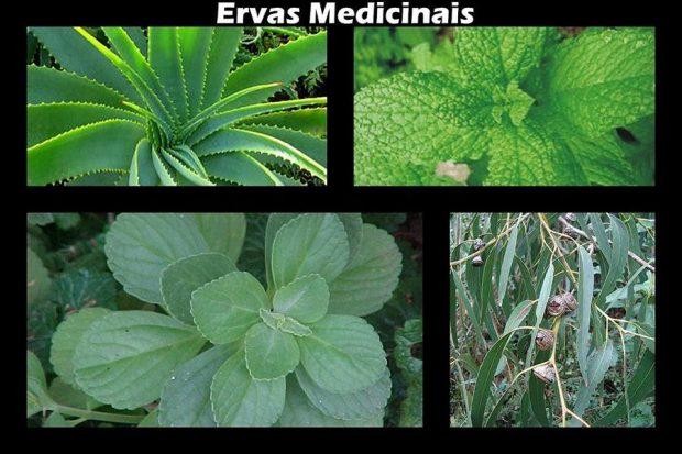 amazonas-hierbas-plantas-medicinales