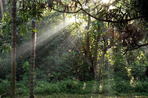 amazonas-hierbas-plantas-medicinales-jungla