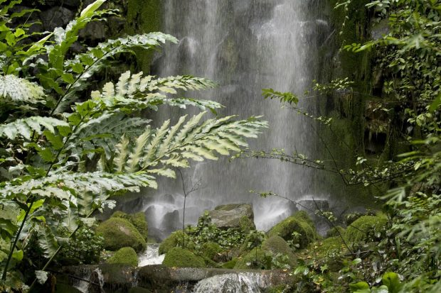 amazonas-hierbas-plantas-medicinales-jungla-cascada-agua