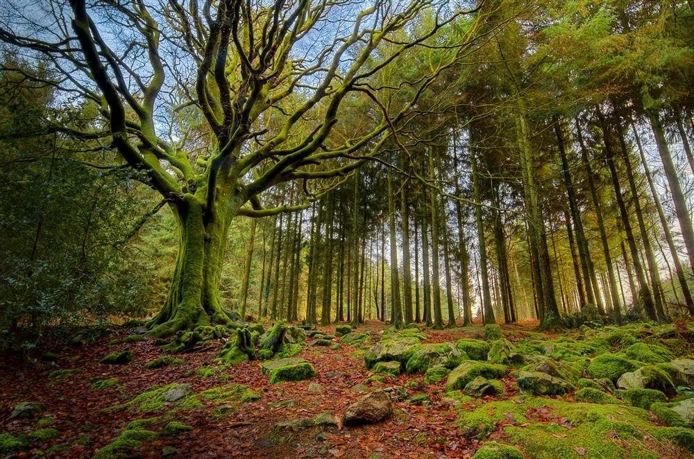 Viajes espirituales a brocelandia bosque de merl n - Casa asia empleo ...