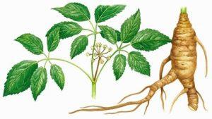 Ginseng plantas regeneradoras de piel
