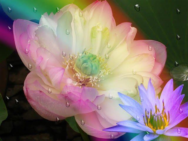 flor de loto - mirándose al espejo