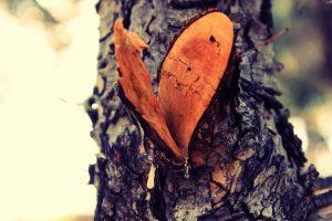 El Amor es el más bello misterio